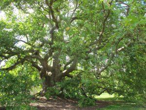 Rycote Park