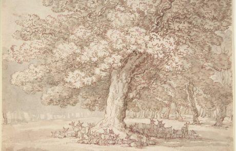 Drawing Oak Tree